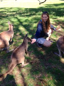 feeding-the-wallabies